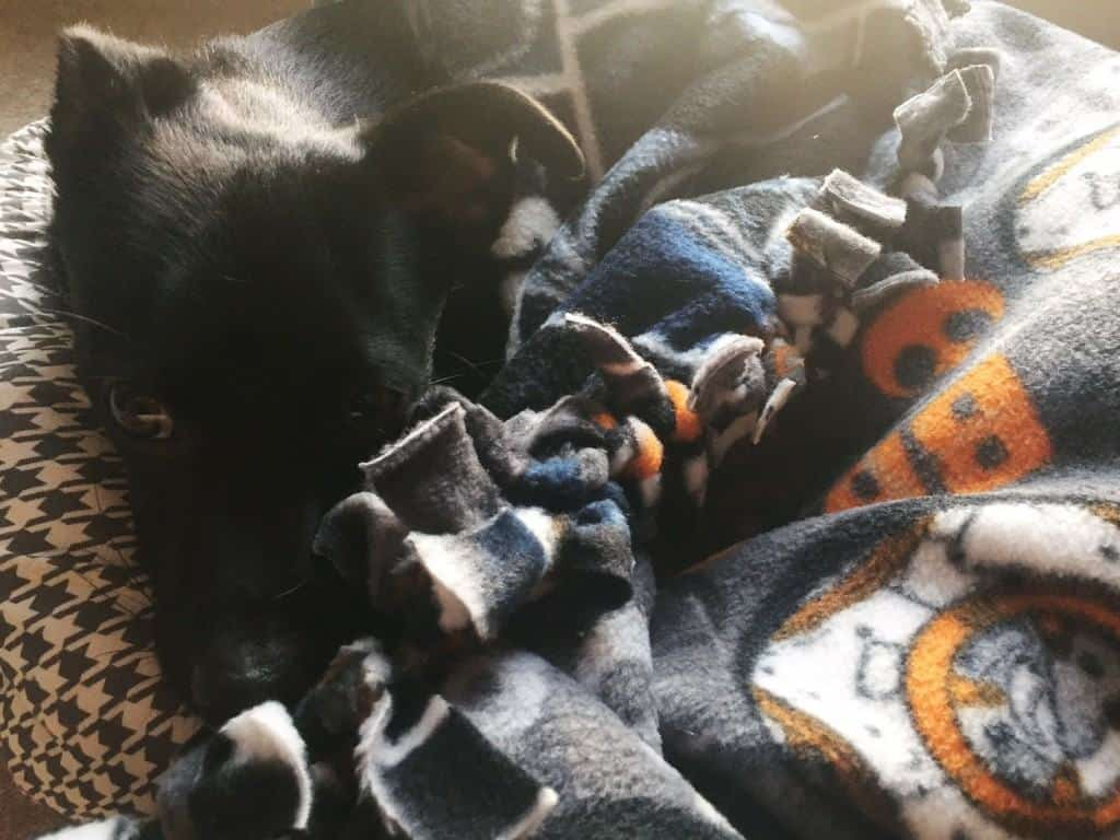 Darth Vader Blanket for Dogs