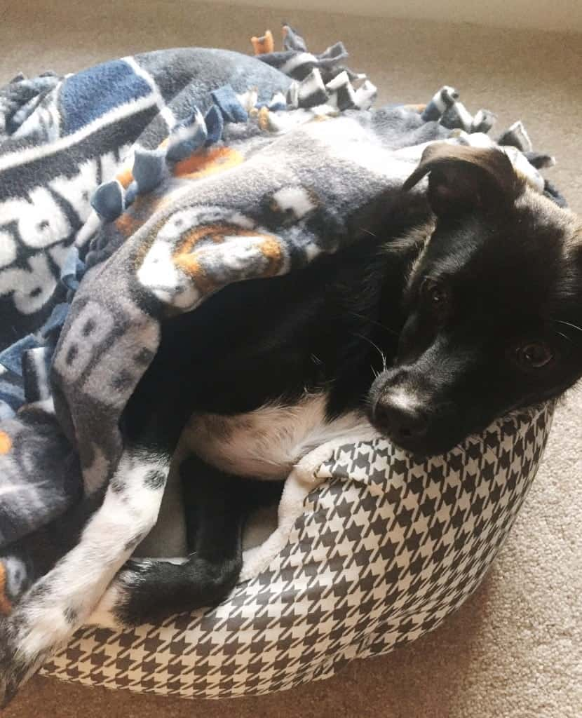 No Sew Blanket For dogs