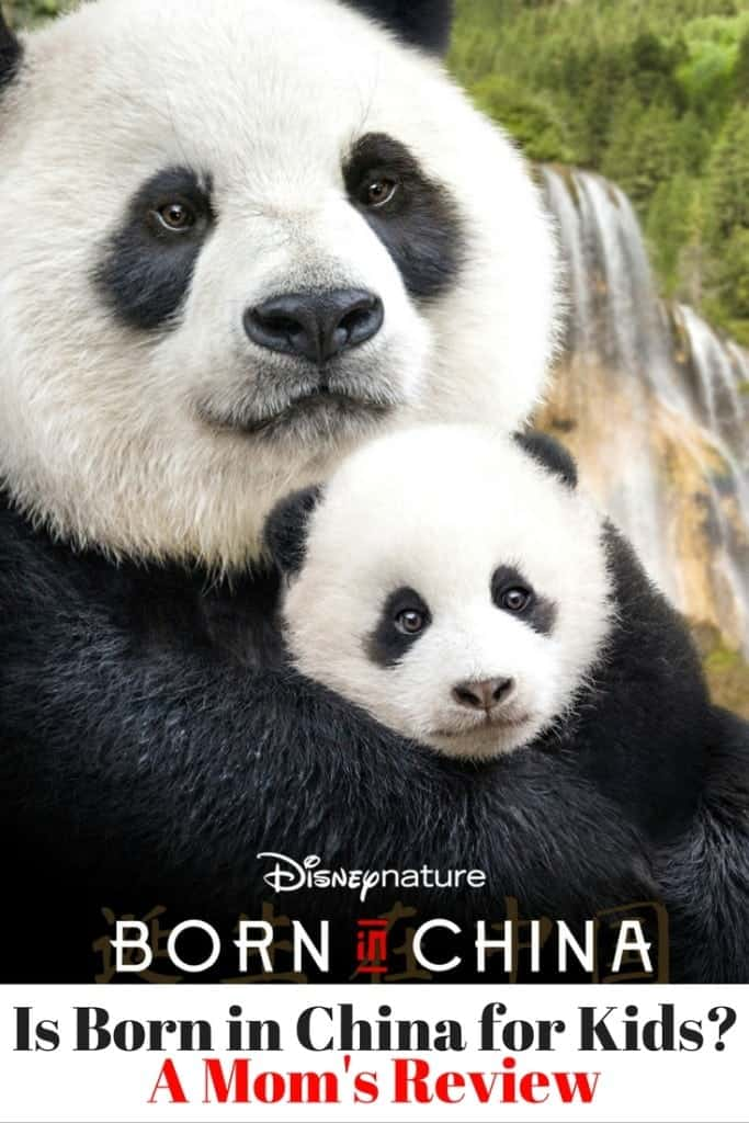 Disneynature's Born in China Review - Is Born in China for Kids?  Are the animals too scary? Will your kids be entertained? What ages should watch Born in China? I answer these questions from a mom's point of view.
