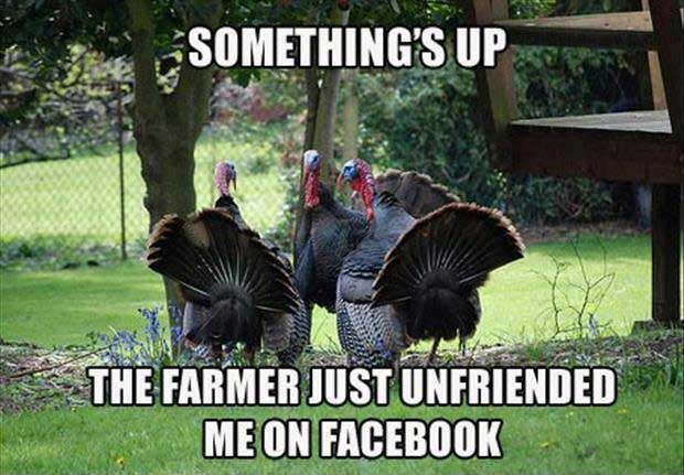 Facebook Thanksgiving Meme